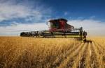 combine harvesting wheat crop Putin