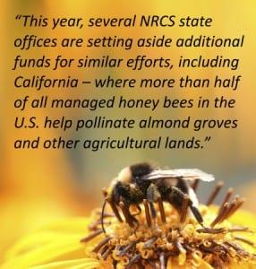 Pollinator-Pull-Quote