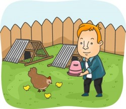 Man Feeding Chickens in Backyard