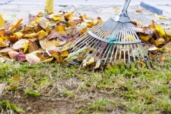 fall leaves with fan rake on lawn