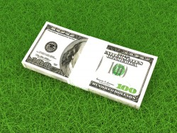 Dollars in the grass