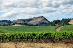Vineyard of Napa in California-wine