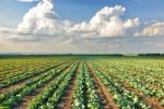 agriculture productivity