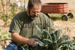 Farmer Veterans, Cypress Hill Farm