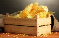 fresh corn in box, on wooden table