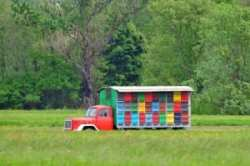 bee hives on truck