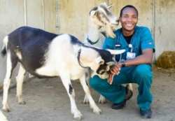 Two curious patients greet UC Davis veterinary school faculty member Munashe Chigerwe.