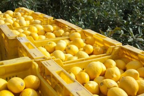 Lemon rule