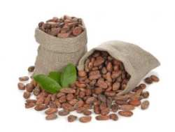 chocolate Cocoa beans in a bag