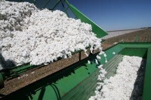 California Cotton