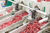 national processed raspberry