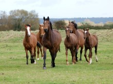horses soring