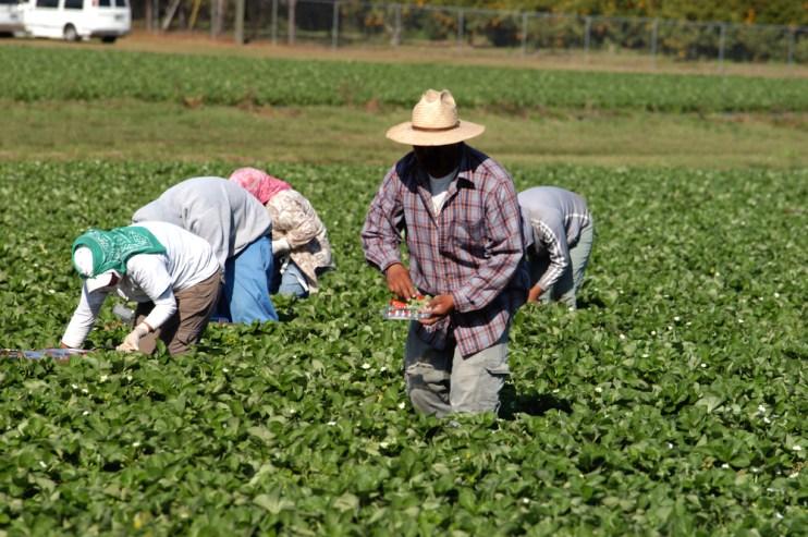 farm workforce Modernization