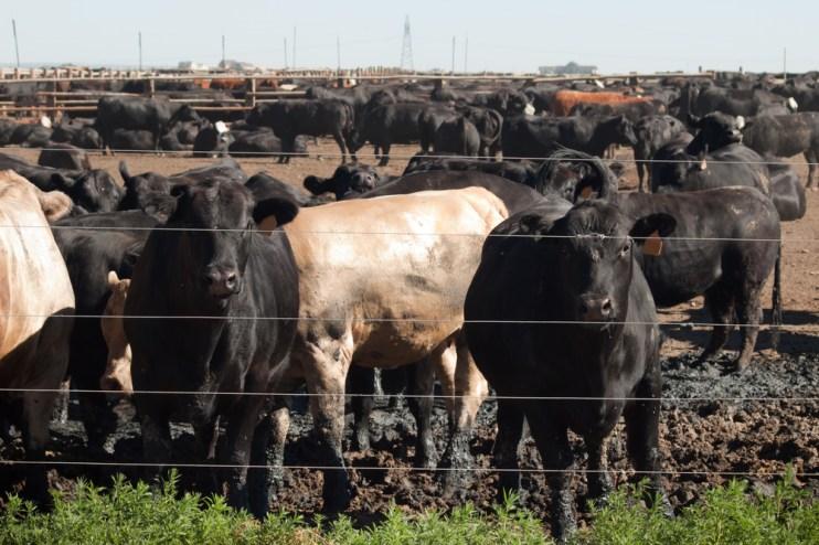 Farm System Reform Act