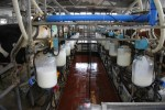 California milk production dairy