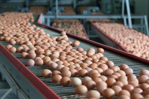 USDA Seeks Nominees for American Egg Board