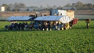 migrant labor shortage