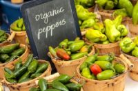 fresh-organic-jalapenos-peppers-on-display-at-locals-farmers-market