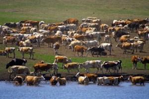 Livestock Insurance Program