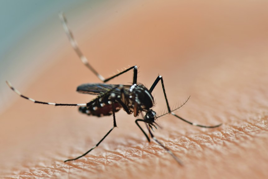 plants repelling mosquitoes