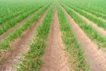 crop protection plans