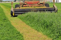 california-ag-central-valley-mowing-alfalfa-hay-2 genetically