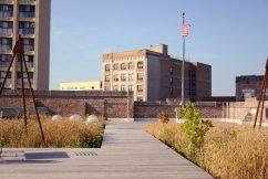 Omni Ecosystems Rooftop Wheat Garden