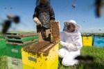 beekeeping-6