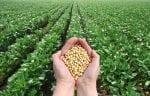 Informa soybean-field