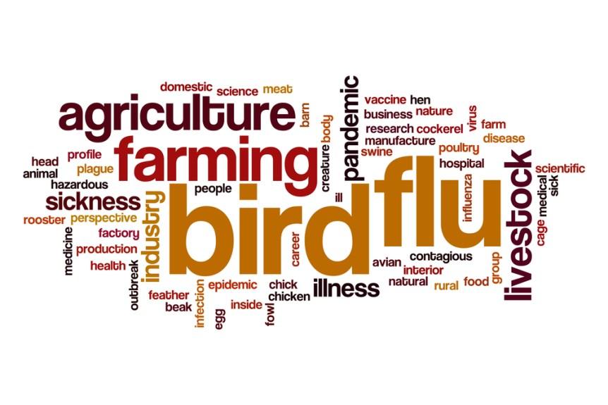 avian bird flu