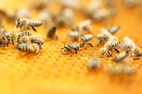 summer bee loss