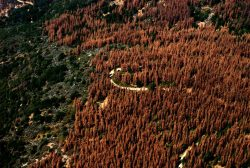 dead trees california-forest-dying-trees-18