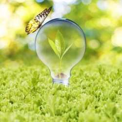 light-bulb-with-plant-growing-inside-on-green-grass-and-butterfly-concept-of-eco-technology
