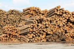 softwood lumber piles-of-cut-wood-at-timber-mill