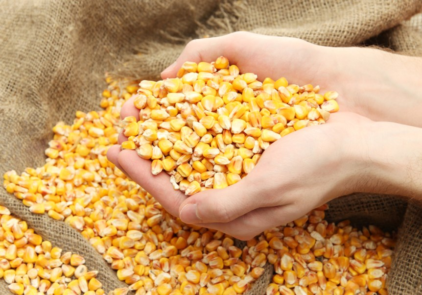 grain, on brown corn background
