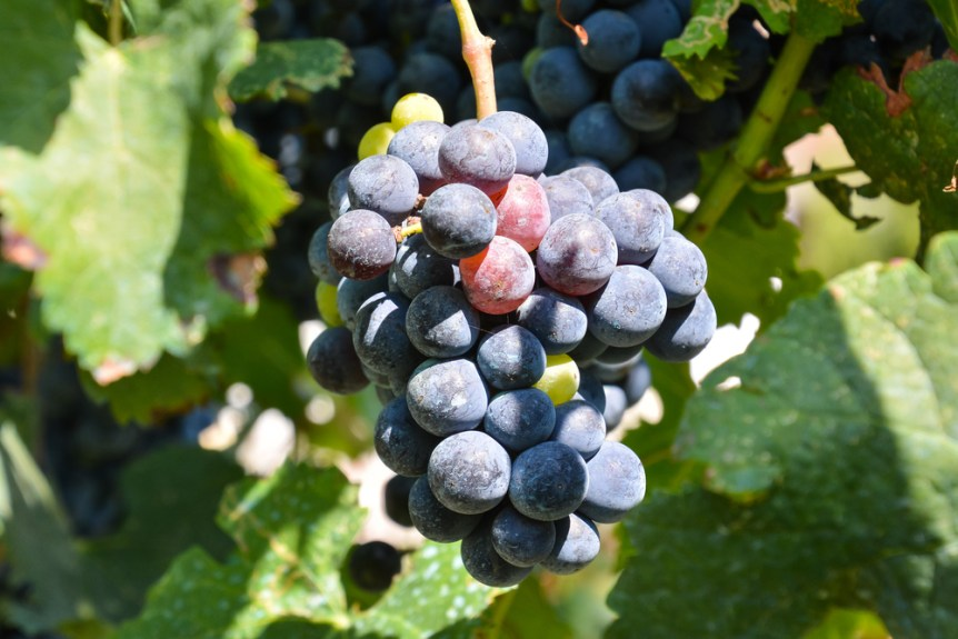 grape crush