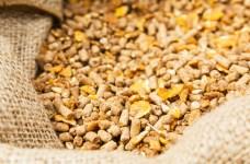 grains exports