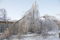 TORONTO - DECEMBER 23, 2013: Winter ice storm aftermath showing devastation caused to trees.