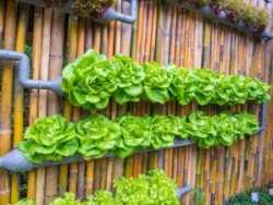 Vertical Garden Ideas Agnet West