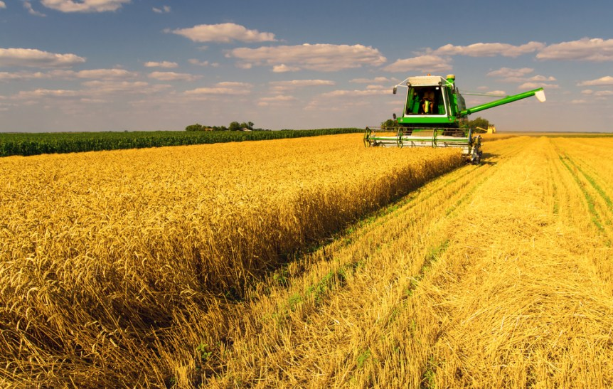 world agricultural