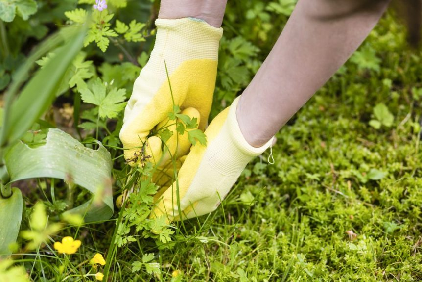 weed garden