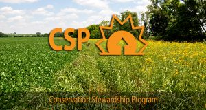 CSP applications