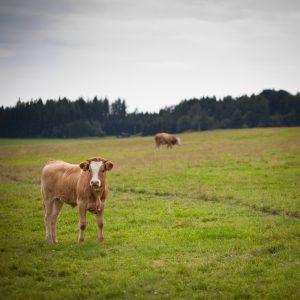 pastureland