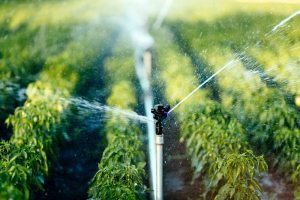 Agricultural Reuse