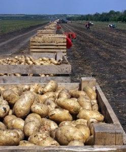 potato dispute