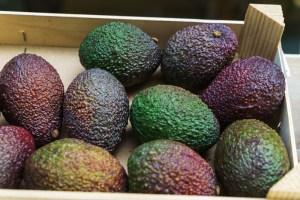 California Avocado Season