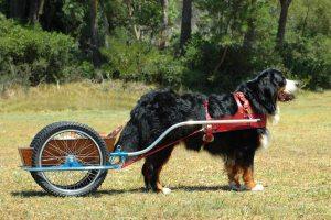 weird wackiest jobs dogs