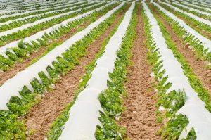 Farm to Family Program