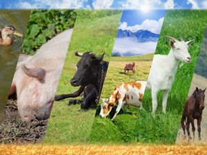 Organic Animal Welfare