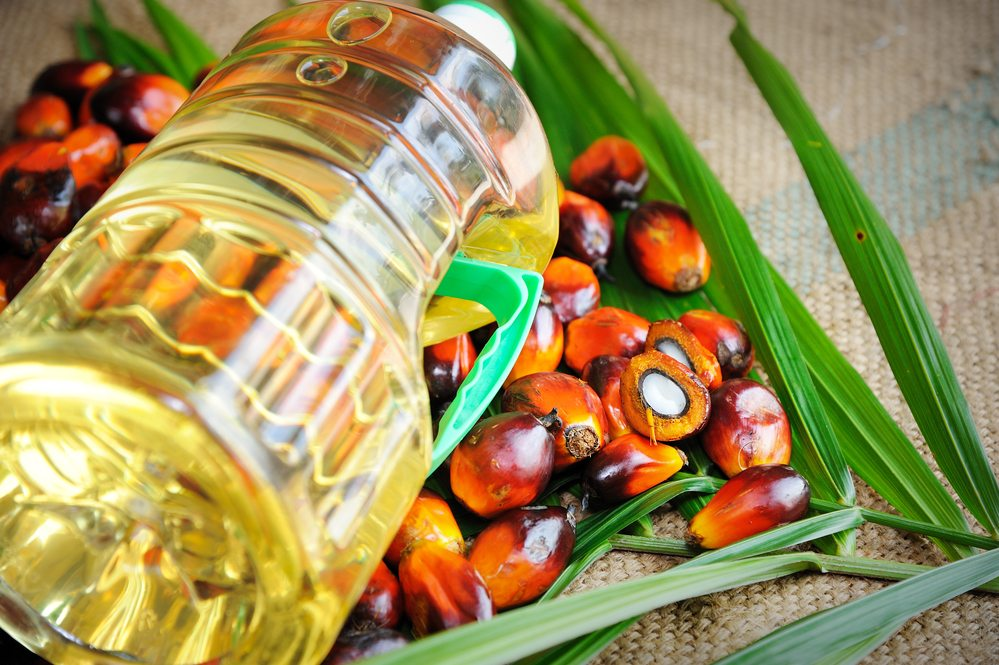 EU Moves to Ban Palm Oil from Biofuels